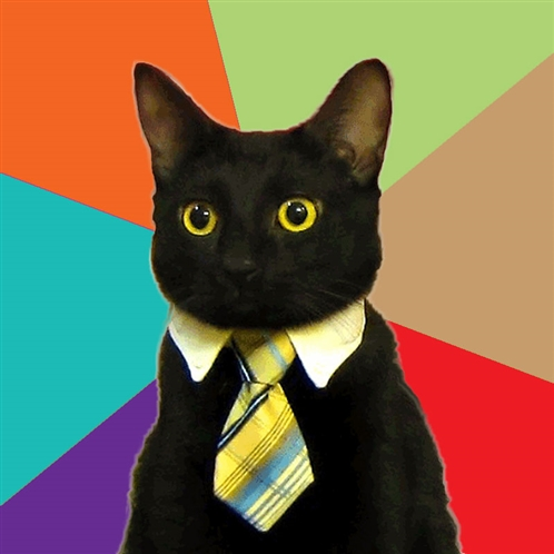 Meme - Business Cat